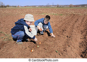Boys sowing onion