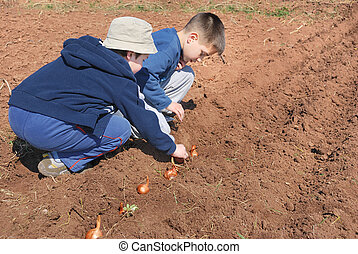 Two cute boys playing and sowing onion.