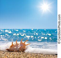 bränning, snäckskal, sand, havsstrand