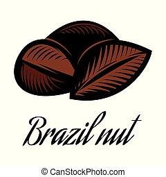 brésil, couleur, écrou, vecteur, illustration