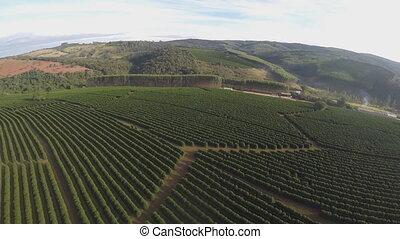 brésil, (drone, café, plantations, footage)