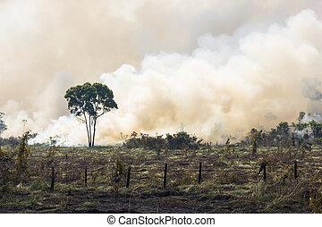 brésilien, amazonia, brûlé