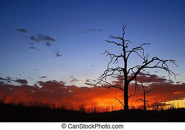 brûlé, arbre, coucher soleil