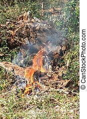 brûlé, brûler, -, prohibition, forêt verte, gaspillage