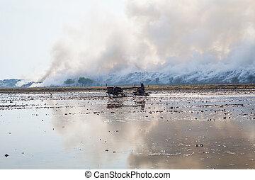 brûlé, déchets, tas, fumée