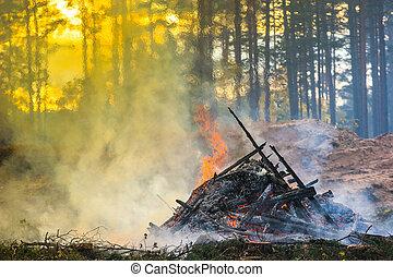 brûlé, fire., waste., forêt, fumée, découpage