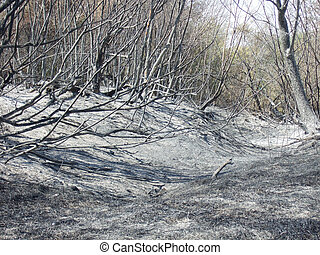 brûlé, forêt