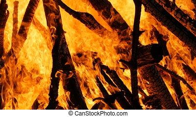 brûler, élevé, branches, forêt, arbres.