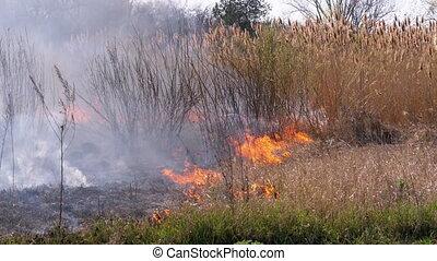 brûler, arbres, reeds., herbe, sec, forest., motion., lent, wildfire., brûlé