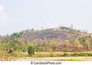 brûler, because, colline, arbres, sans
