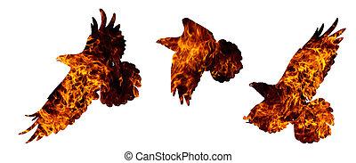 brûler, blanc, corbeau, isolé, commun