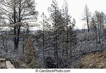 brûler, conséquences, forêt