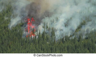 brûler, hélicoptère, forêt