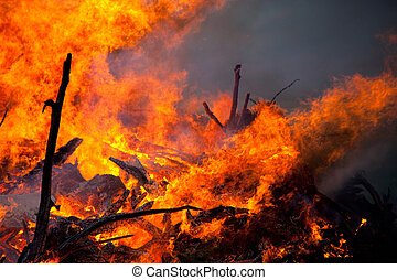 brûler, langues, flamme, fumée, forêt