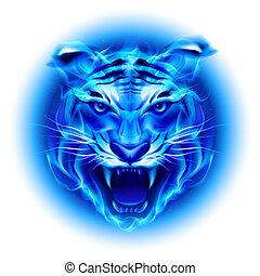 brûler, tête, tiger., bleu