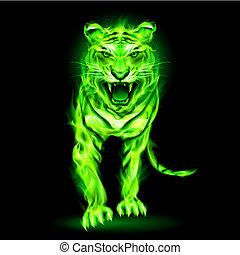 brûler, vert, tiger.
