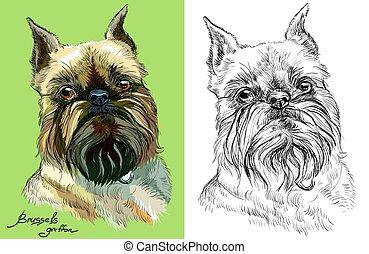 brüssel, vektor, schwarz, weißer hund, gefärbt, porträts, griffon