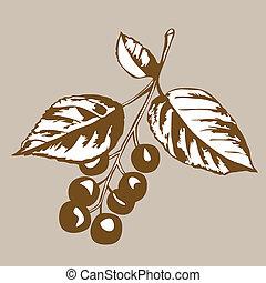 brązowy, rodzaj, wektor, wiśniowe drzewo, ilustracja, tło