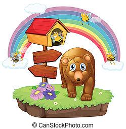 brązowy, strzała, pethouse, niedźwiedź, deska