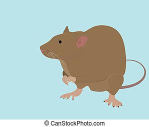 brązowy, szczur