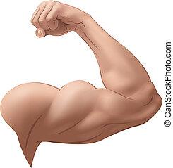 braço, homem