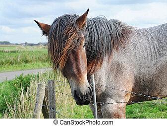 Brabant draft horse in meadow in rural landscape
