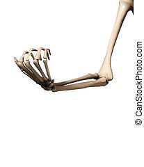 braccio, osso, mano