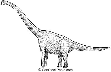 Brachiosaurus illustration, drawing, engraving, ink, line art, vector