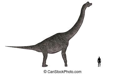 Brachiosaurus Size Comparison - Illustration of a comparison...