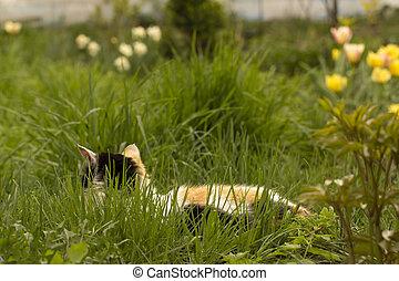 bradavičky, kočka, lies, čerň, mladický neposkvrněný, pastvina, červeň