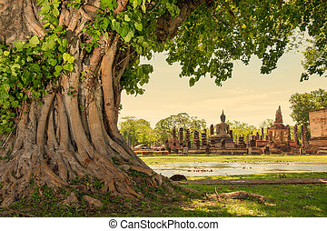 Sukhothai Historical Park, Thailand - Braided roots of large...