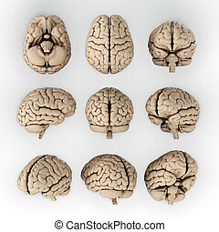 Brain - 3D illustration of human brain in different angles