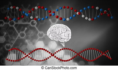 Brain and DNA strands - Digitally generated animation of a ...