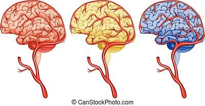 Brain cancer on white background