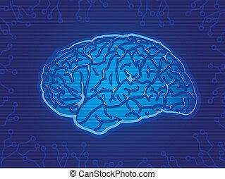 Brain Circuits