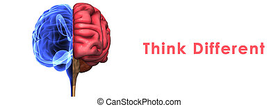Brain - The brain is an organ that serves as the center of...