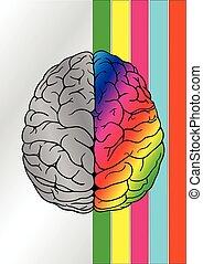 brain concept