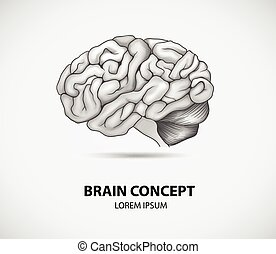 Brain concept - Concept of human brain