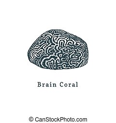 Brain coral vector illustration.Drawing of sea polyp on...