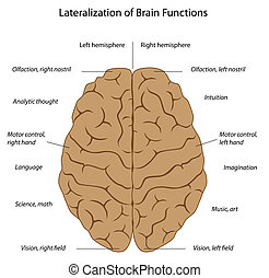 Brain functions, eps8 - Differences in function of the two...