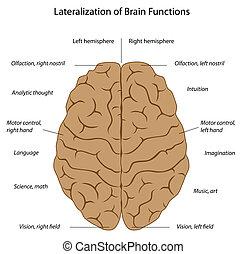 Brain functions, eps8