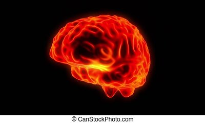 Brain hologram rotating loop