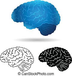 Brain in several styles.