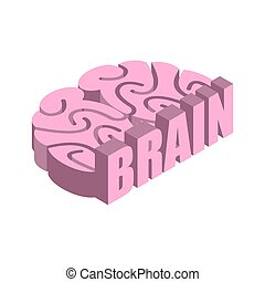 Brain isolated. Human brains on white background