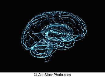 Brain model xray look isolated on black background