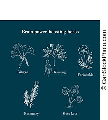 Brain power-boosting herbs set