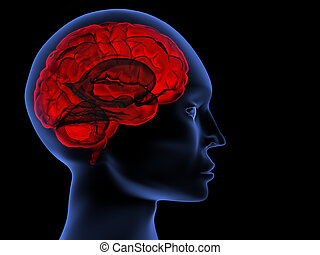 Brain - Scanning of a human brain by X-rays