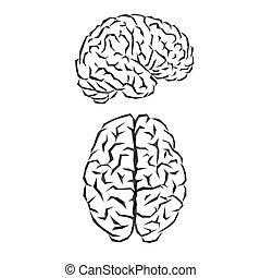 Brain silhouette outline