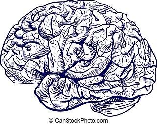 Brain sketch. VECTOR blue hand drawn human brain.