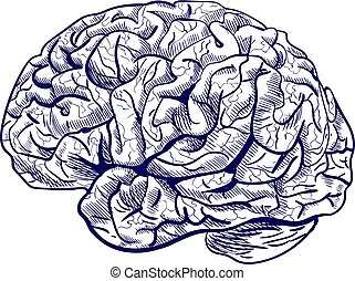 Brain sketch. VECTOR blue hand drawn human brain.